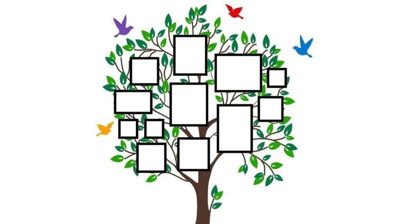 copacul fricilor aha edu